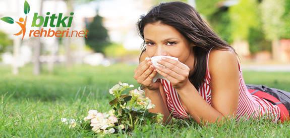 astım bitkisel tedavi