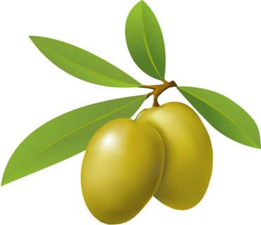Zeytin yaprağı şifalı bitkiler